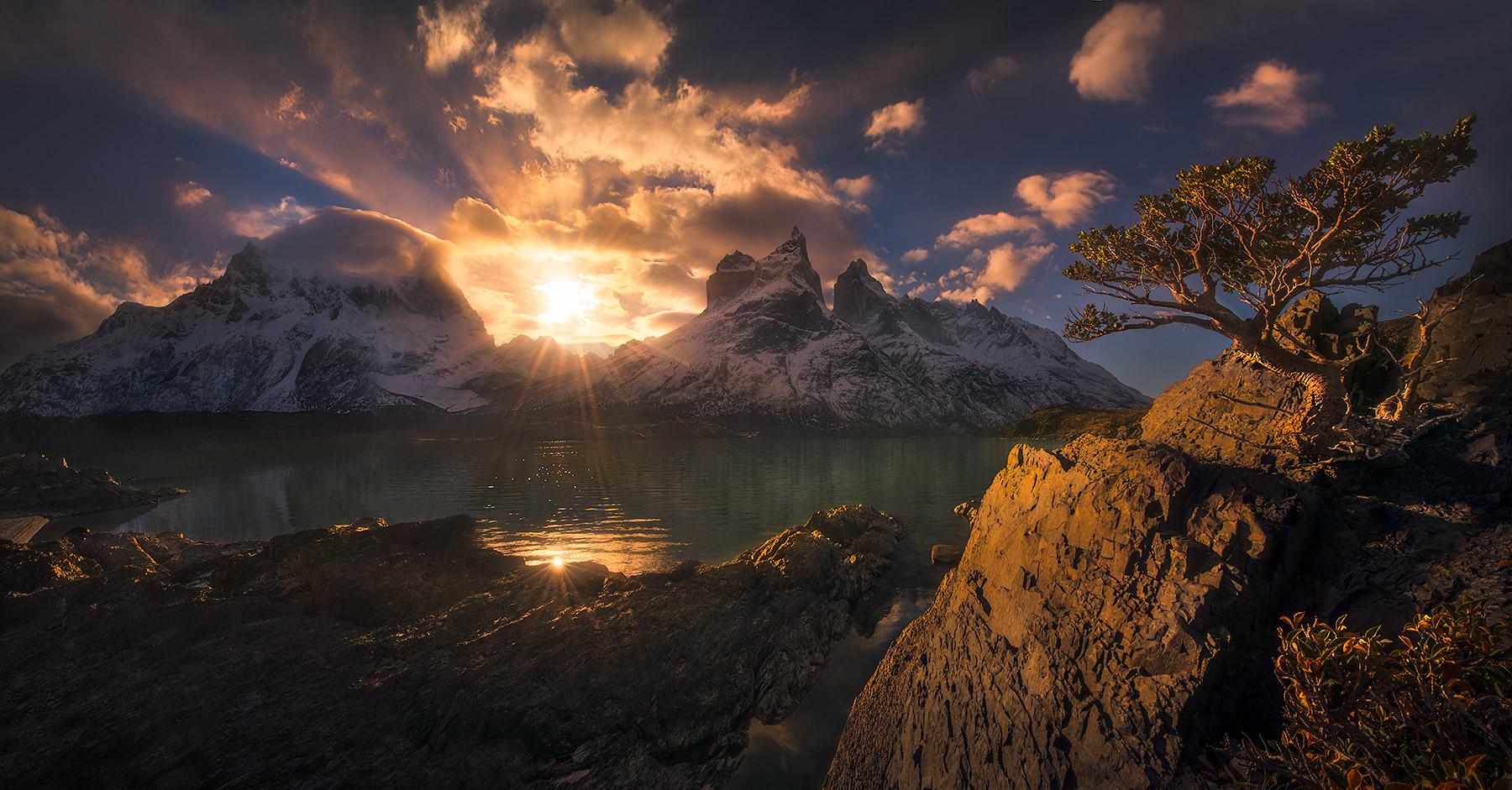 Torres Del Paine Unique Tree Wind, photo
