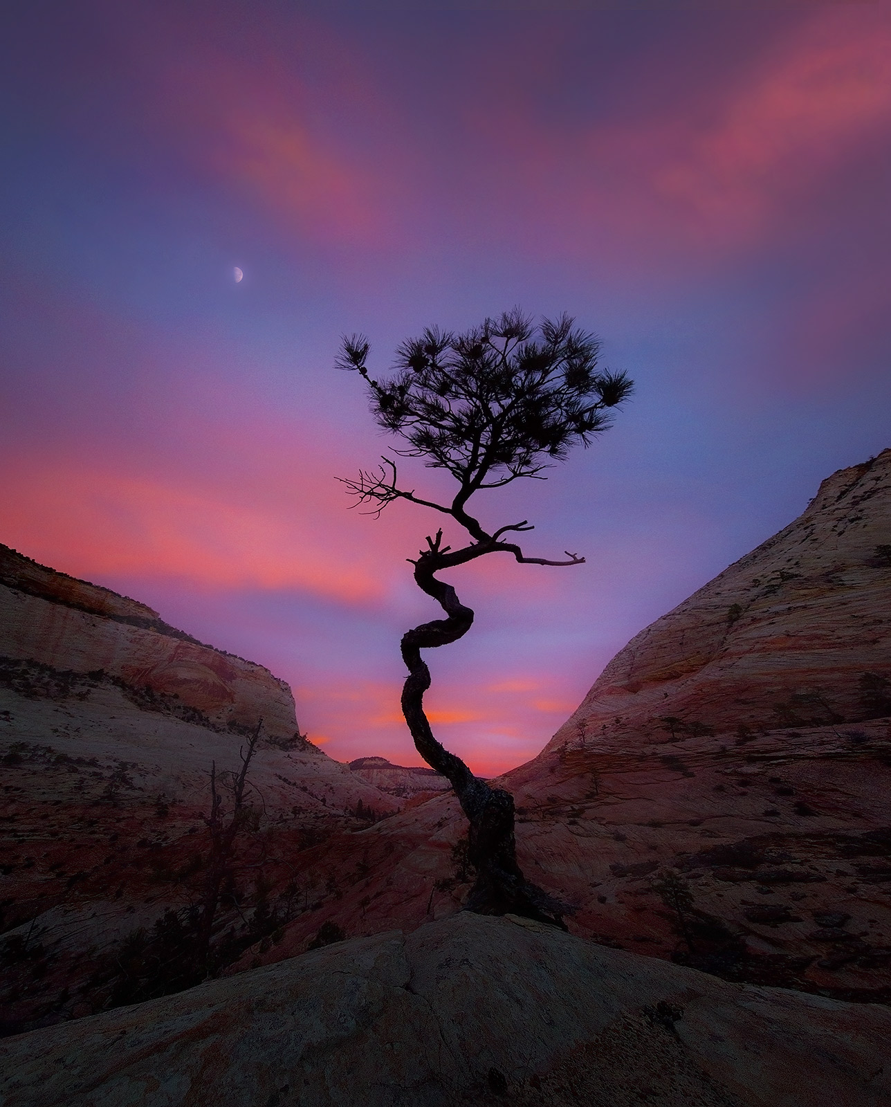 Utah, Lone tree, sandstone, colorado plateau, gnarled, moonrise, twilight, photo