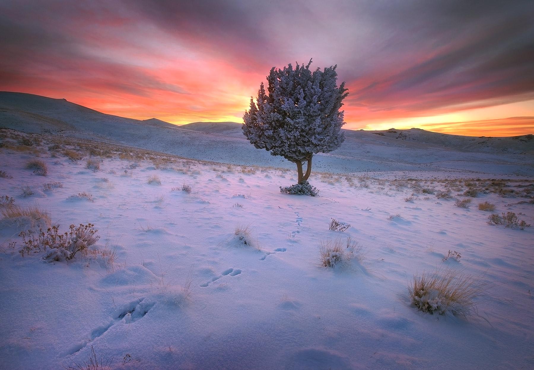 Juniper, Tree, Snow, Sunset, Jack-rabbit, Owyhee, Oregon, Remote, photo