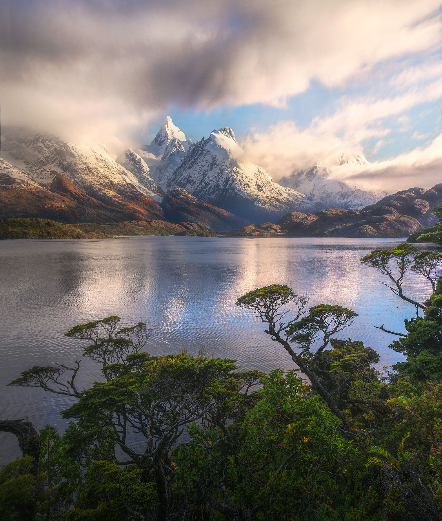 Coigue trees and the amazing foliage of the fiords, South Chile.