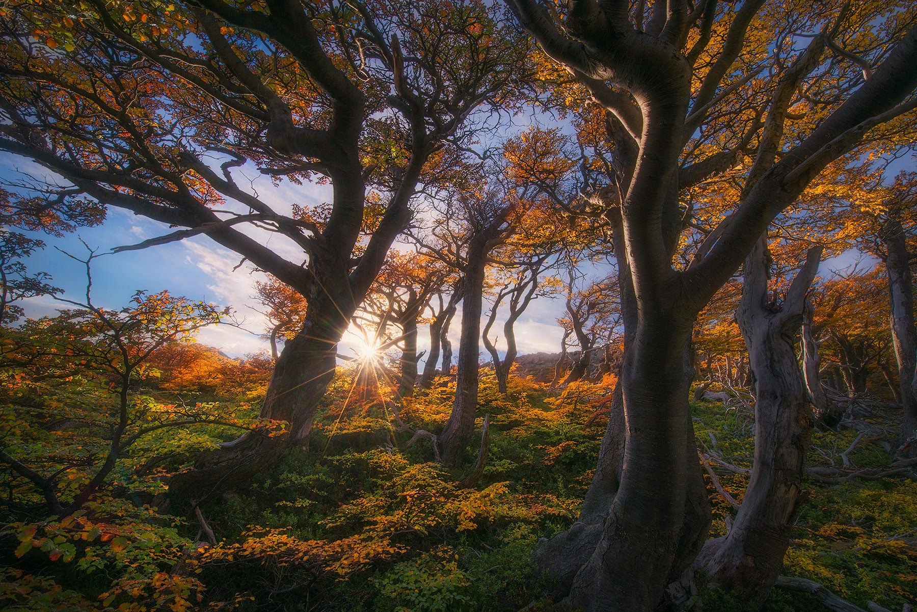 forest, patagonia, autumn, fall, wind, trees, gnarled, photo