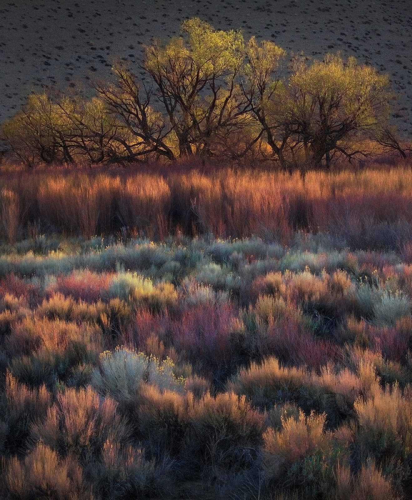 Owens Valley, California, layers, colors, abstract, photo