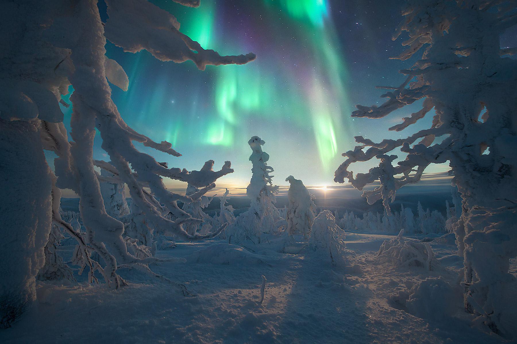 The Aurora Borealis between snowy trees at moonrise in Alaska