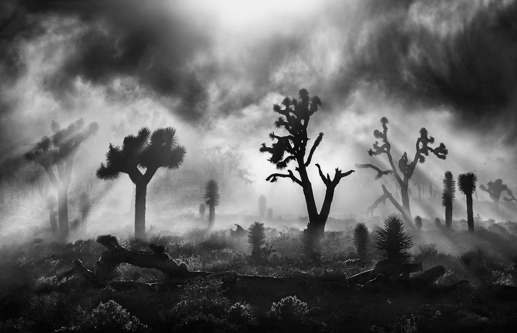 Joshua Tree, California, Death Valley, Unique, Dramatic, photo