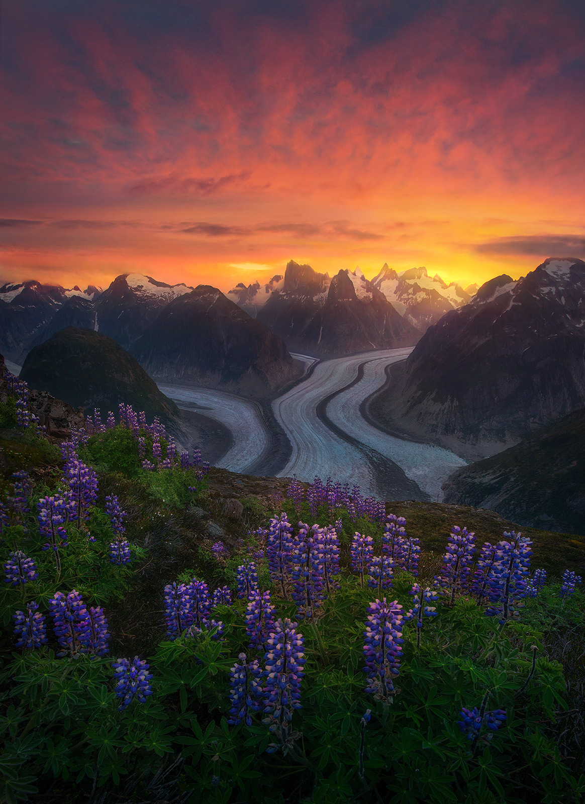 Alaska, wilderness, summer, flowers, remote, unique, glacier, coast mountains, photo
