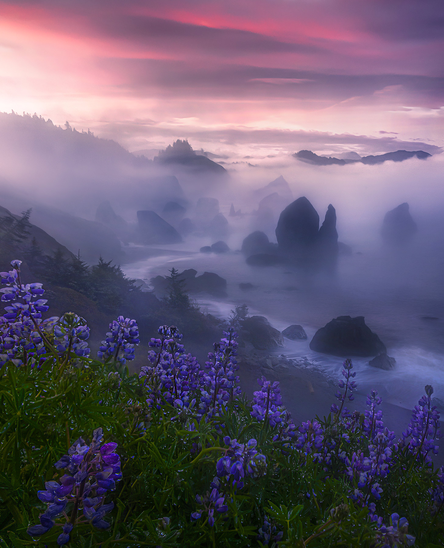 Spring flowers on the Oregon coast are a rare sight, but one that is widespread in certain locations about 1 out of every 3 years...