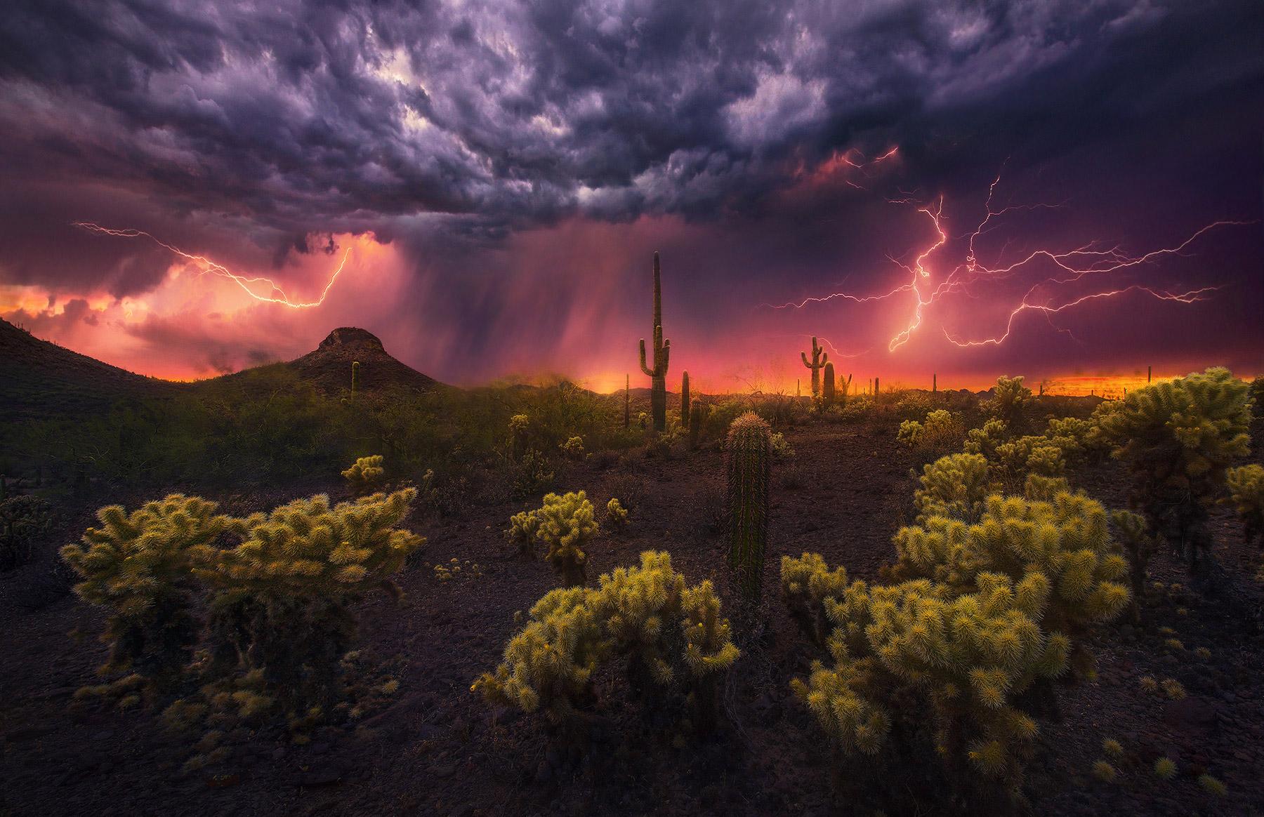 Cactus, desert, lightning, sonoran, phoenix, thunderstorm, monsoon, photo