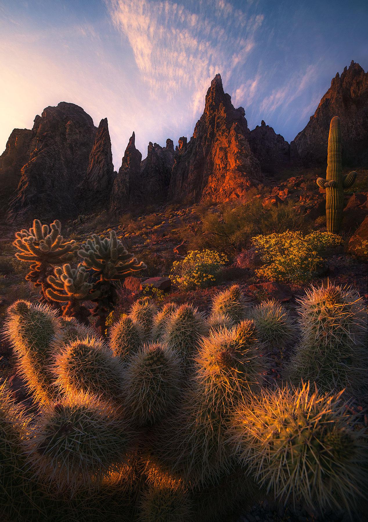Britlebrush, Arizona, cactus, spire, mountains, photo