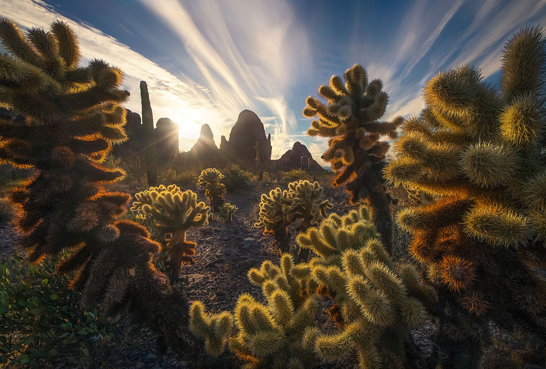 cactus, arizona, sunset, photo