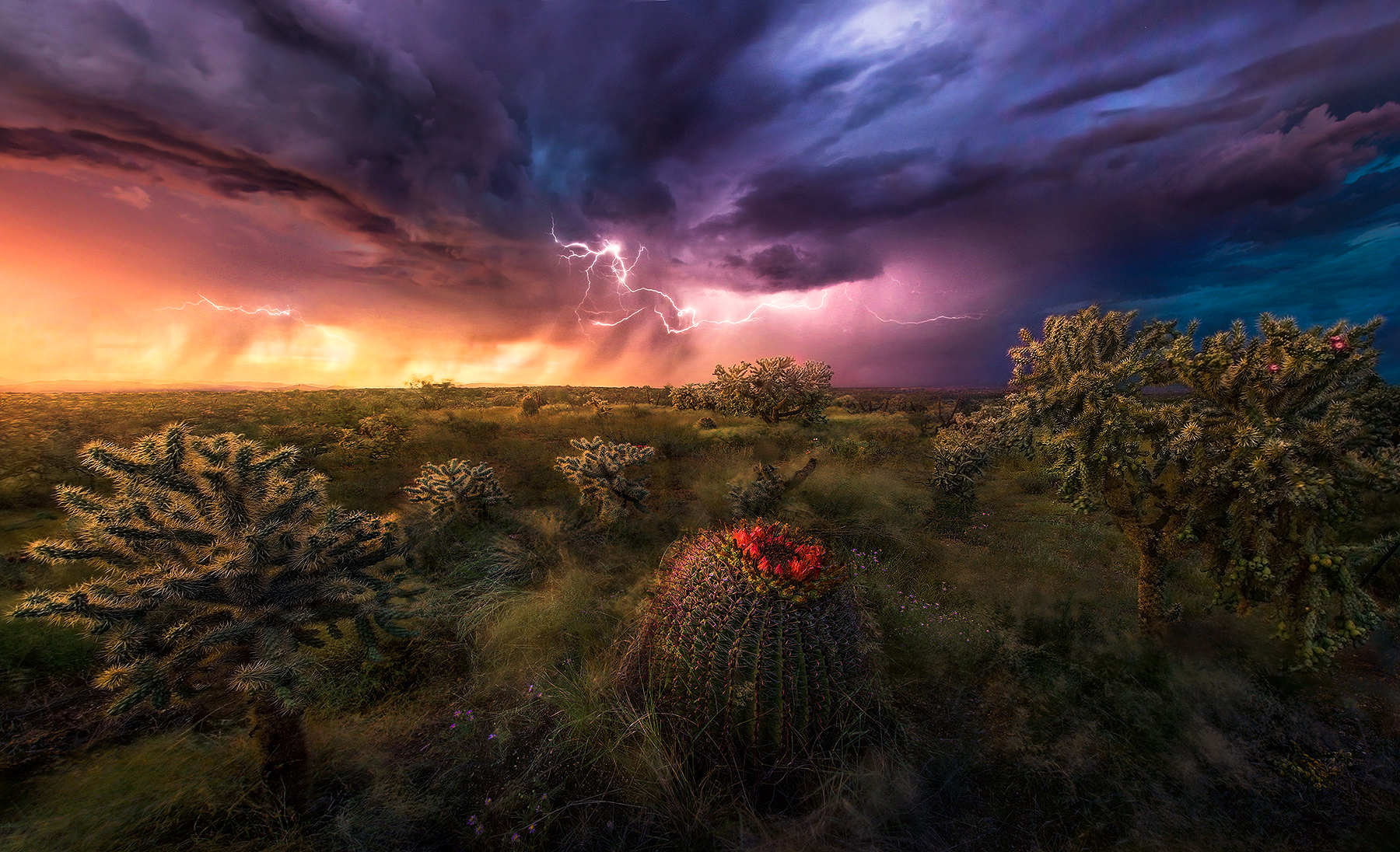 cactus, arizona, storm, lightning, Lemmon, photo