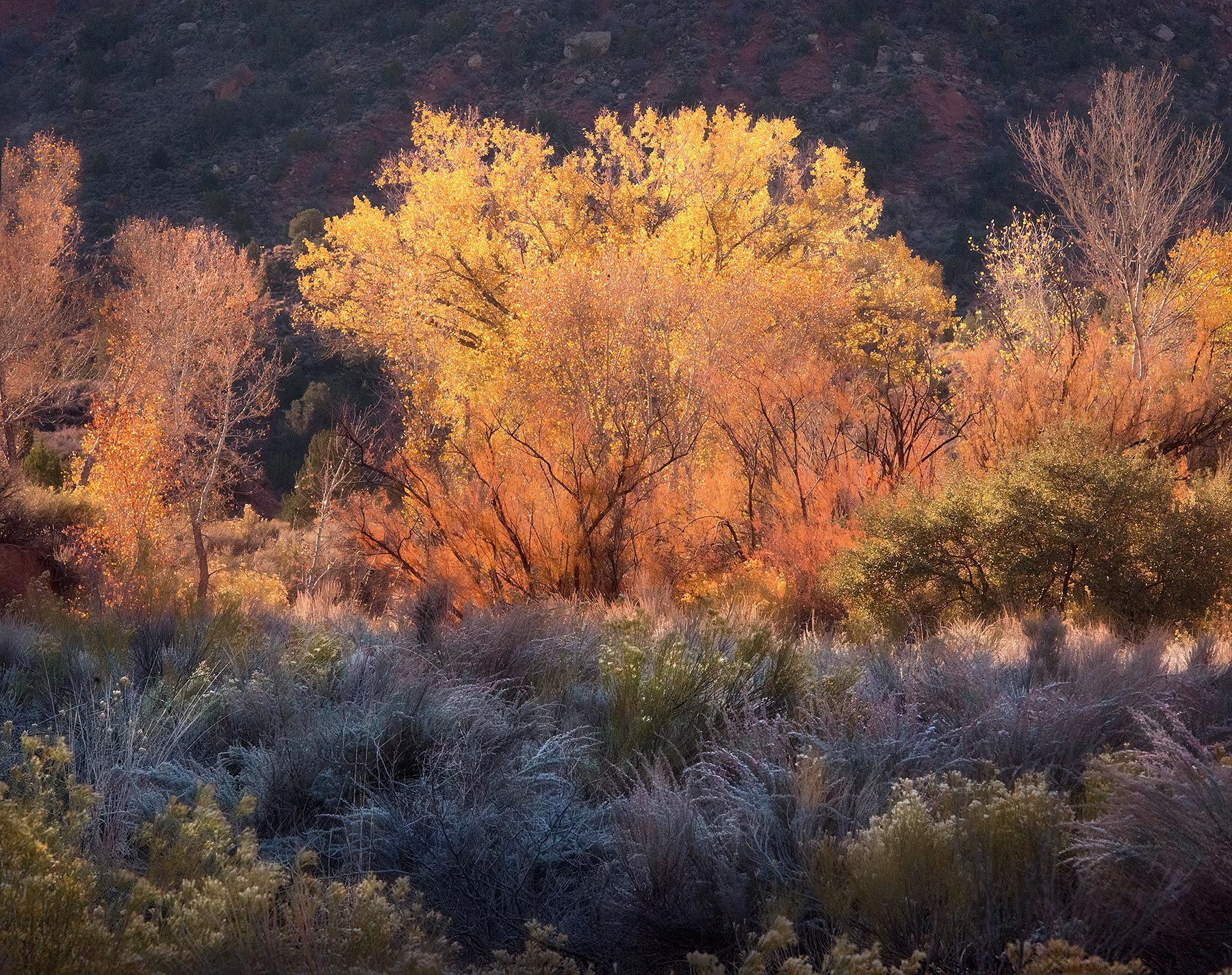 beautiful, morning, colors, utah, high desert, photo