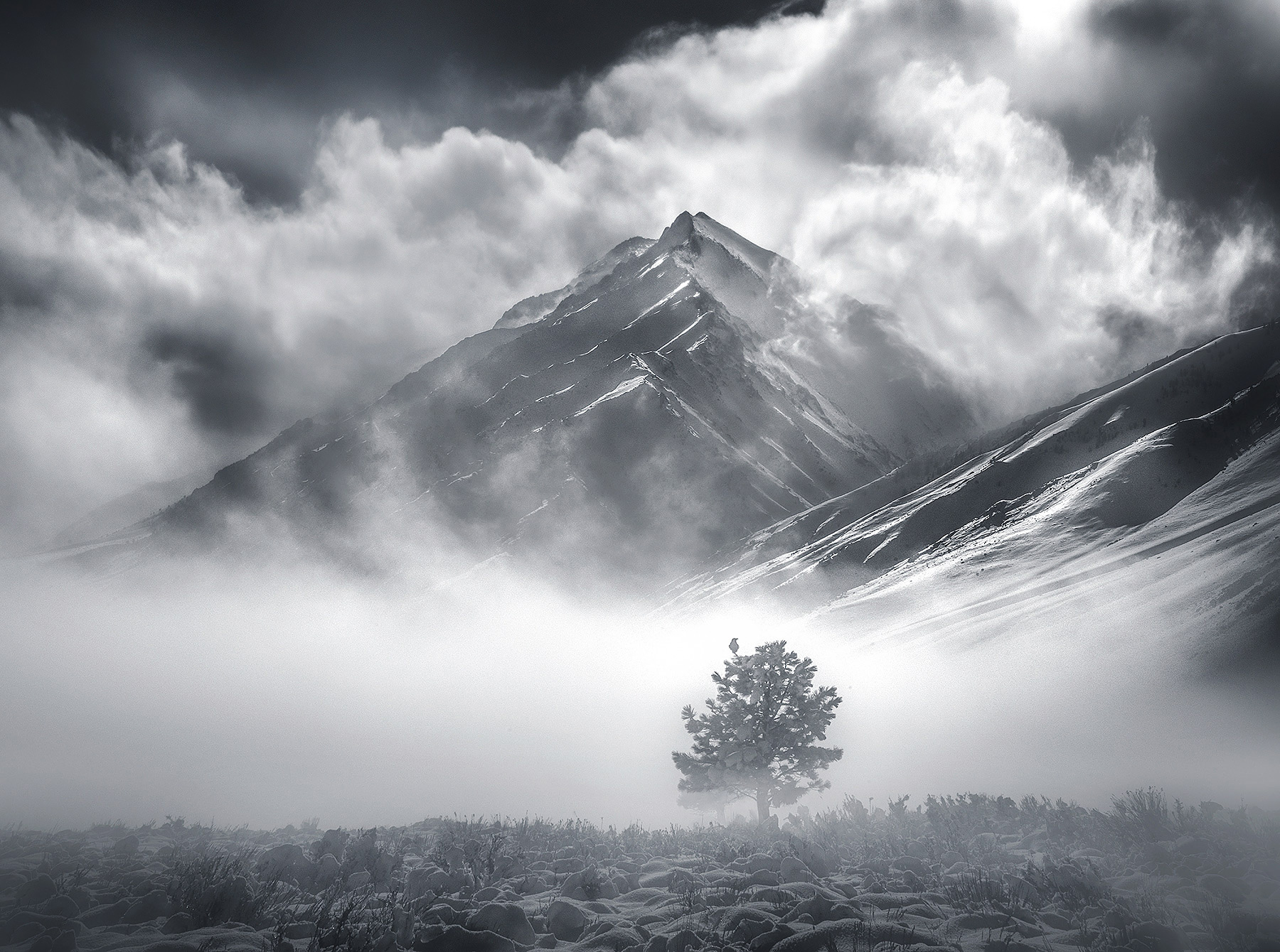 A lone raven on a tree in the fog catching a magic moment of light one winter day in the Eastern Sierra.  Single exposure.
