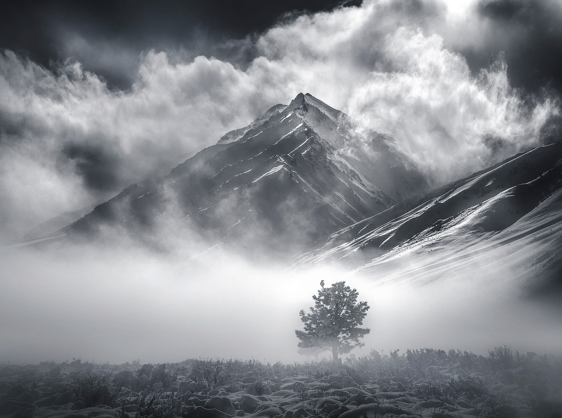 Raven, fog, peaks, Sierra, winter, photo