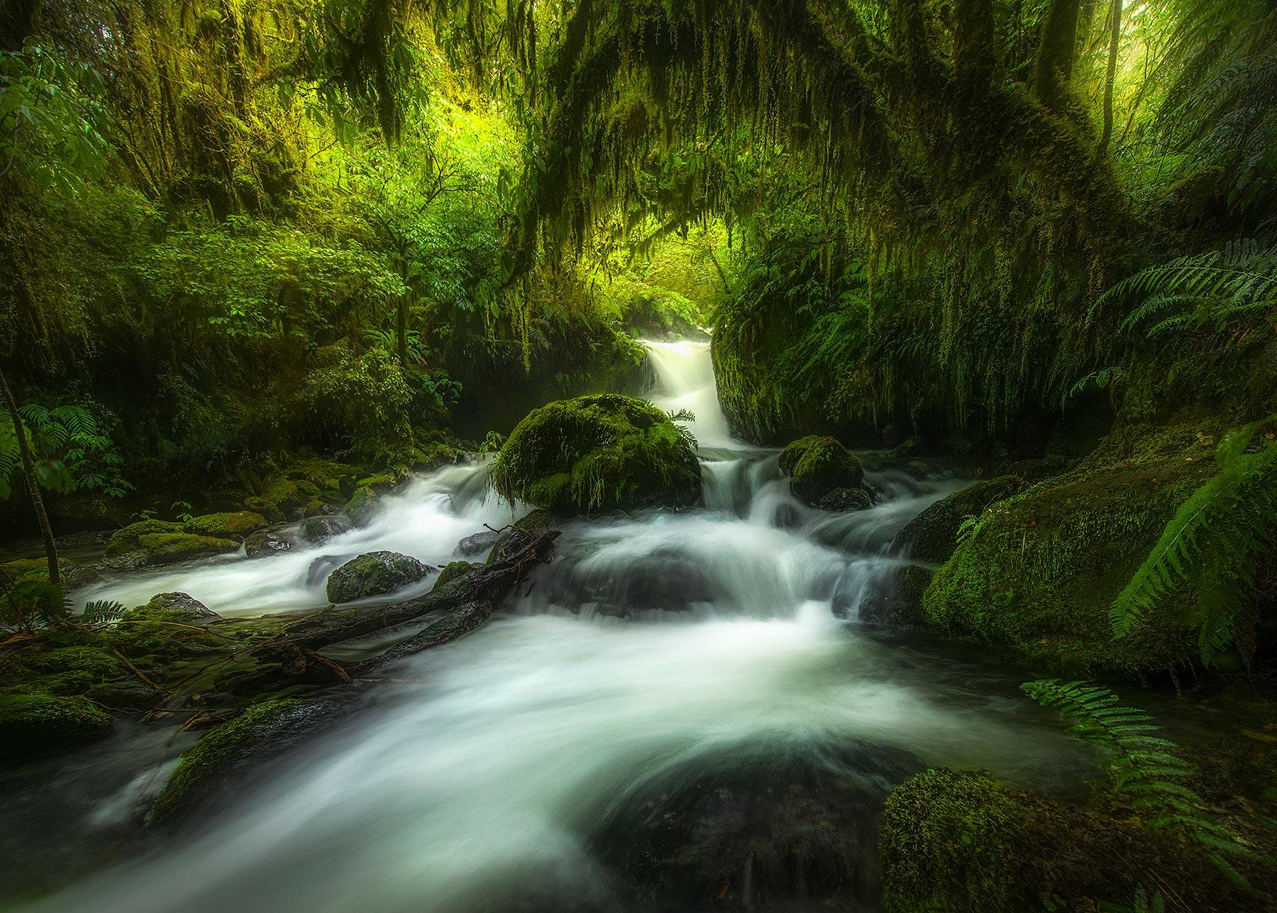 Hollyford, New Zealand, fern, forest, rainforest, stream, photo