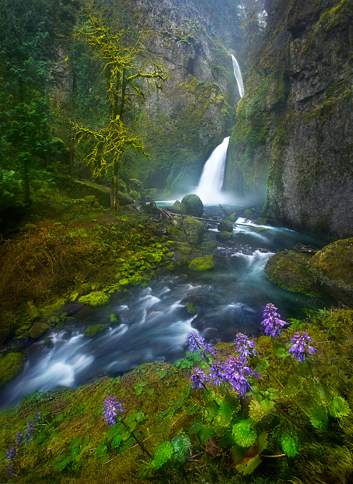 Wahclella Falls, Oregon, Columbia Gorge, Flowers, photo