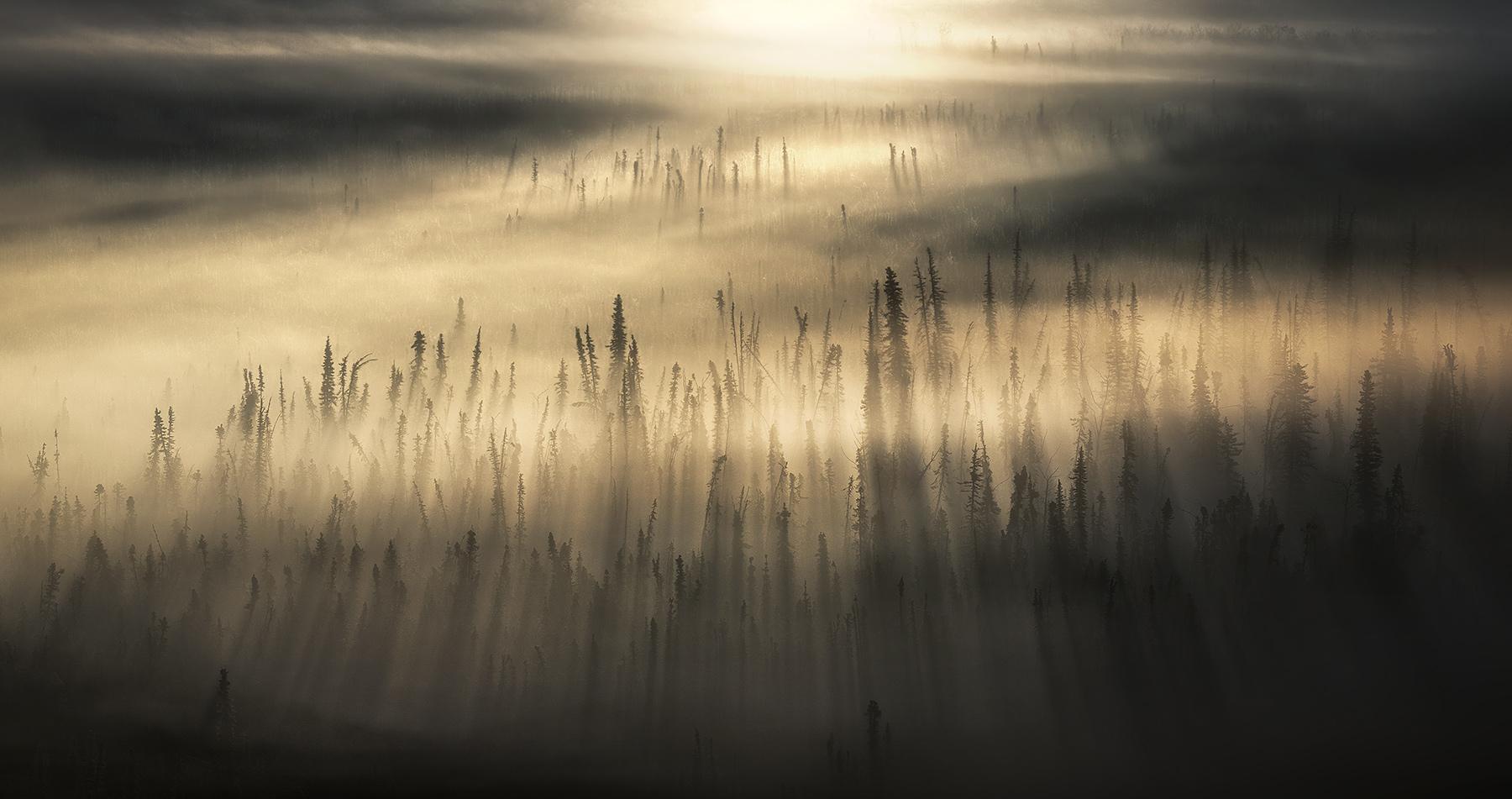 light beams, sunbeam, forest, boreal, Yukon, sunrise, fog, fog beam, god beam, photo