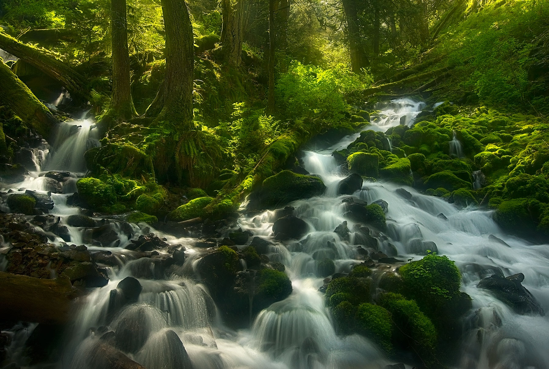 Sunlight, Old-Growth, Oregon, Columbia Gorge, Cascades, photo