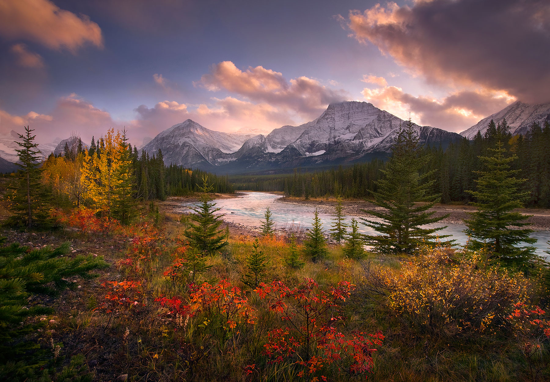 Vibrant fall foliage including Wild Rose, Aspen, Willow and Cottonwood along the shores of Jasper's Athabasca River with sunset...