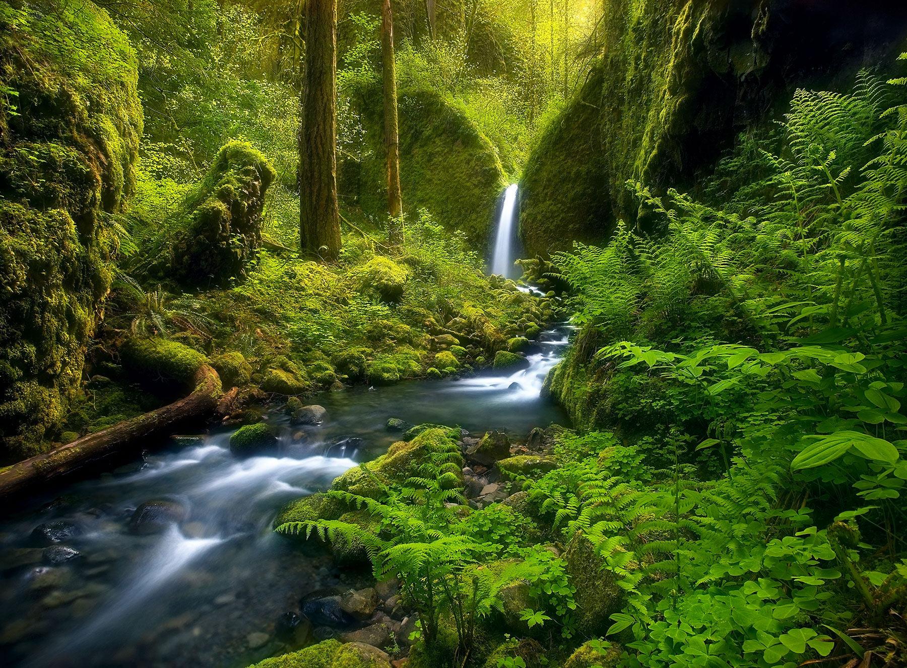 enchanting, waterfall, stream, wild, remote, oregon, columbia gorge, photo