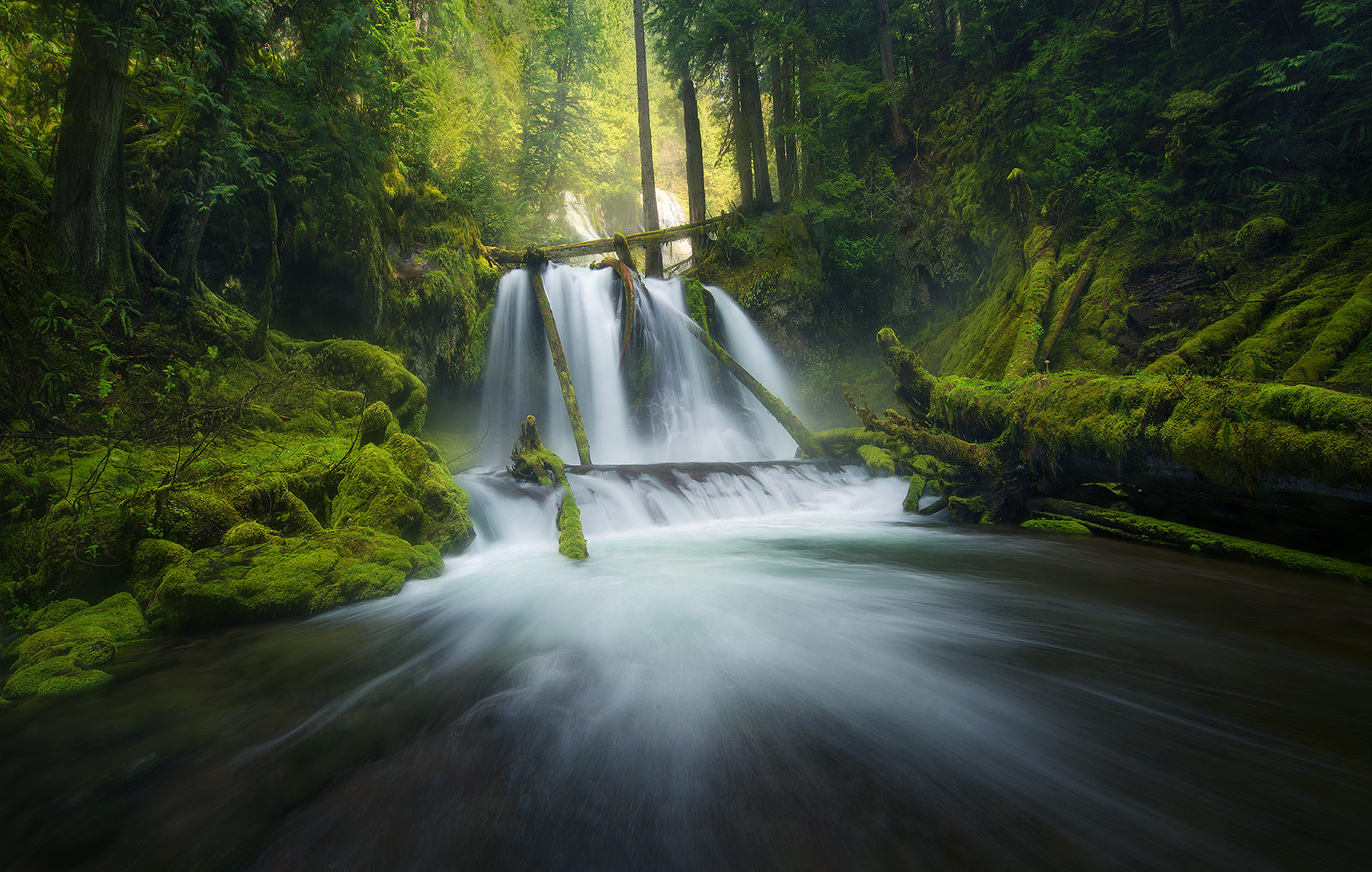 Rain Forest, washington, cascades, waterfall, photo