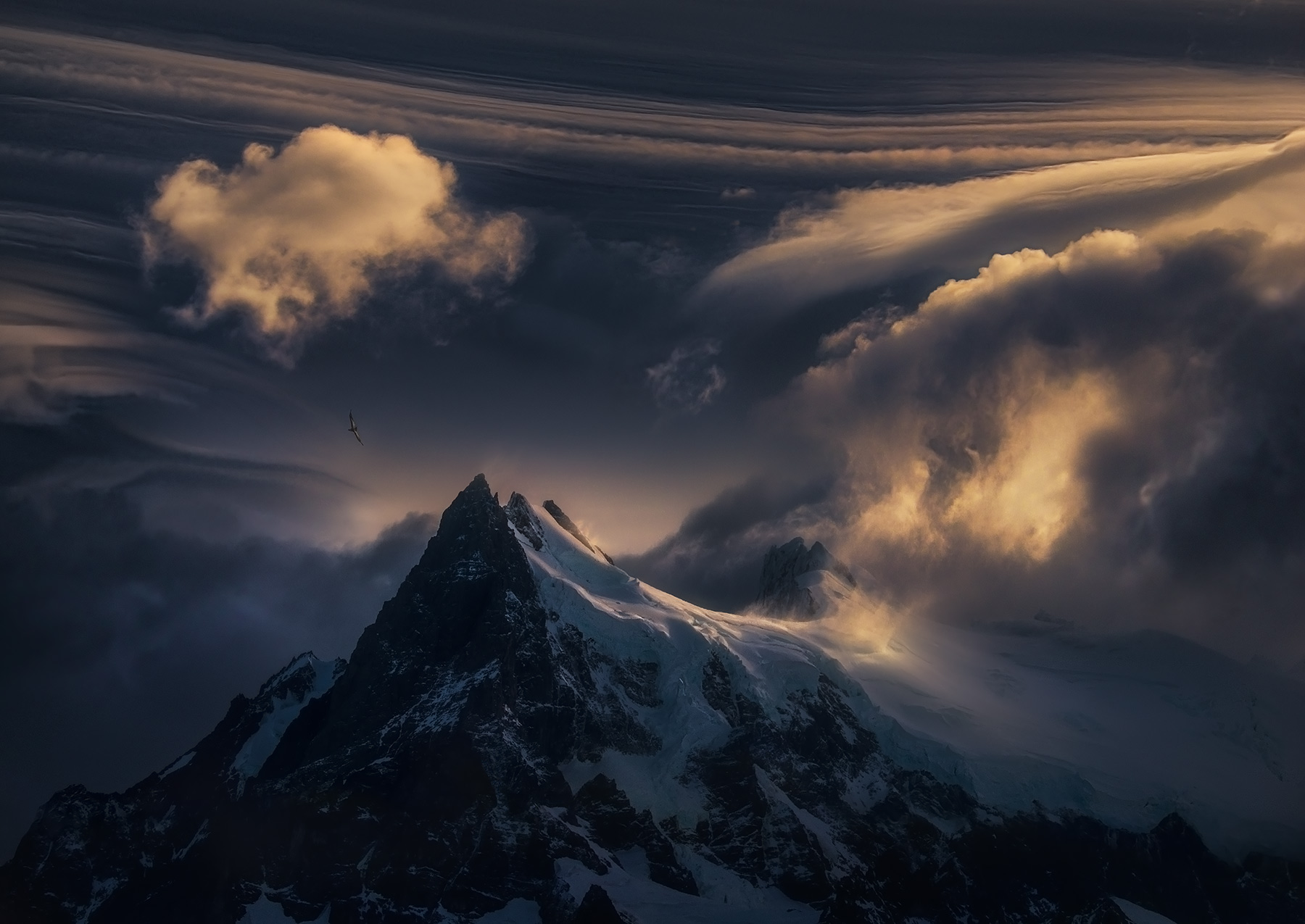 mountain, condor, storm, freedom, winds, alone, photo