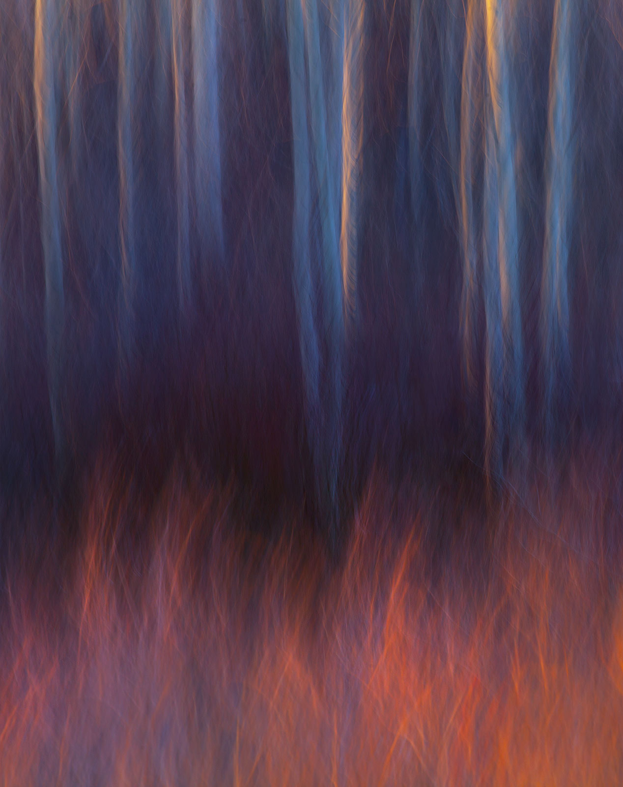 Camera motion during the exposure creates an abstract rendition of Red Willows and Aspen catching the light of sunset on Utah...