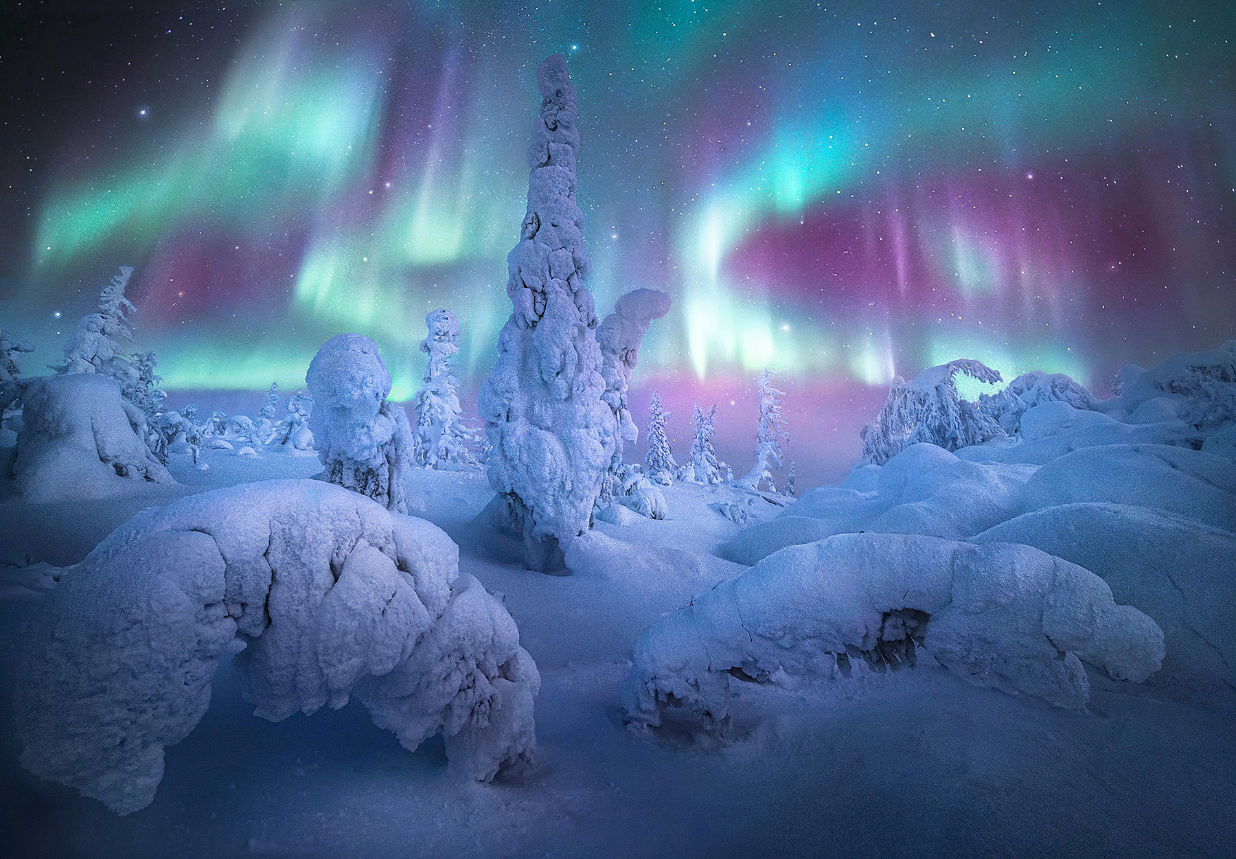 The dance of the Aurora Borealis near my campsite in a forest of rime ice covered trees in Alaska not far from the Yukon River...