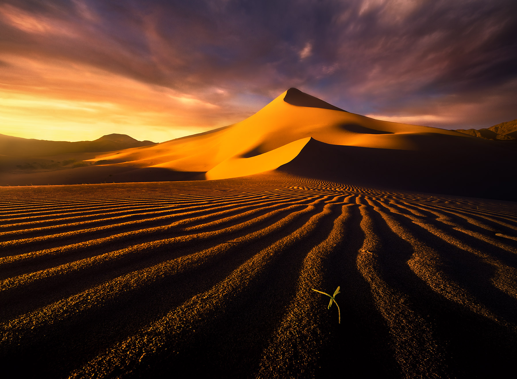 Spring, Sand Dunes, Dunes, Death Valley, California, photo
