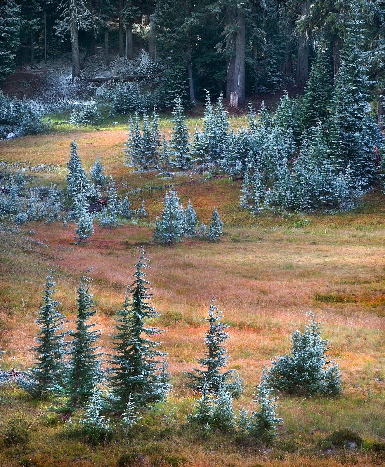Fall, Scenic, wilderness, snow, oregon, cascade, pine, colorful, autumn, meadows, photo