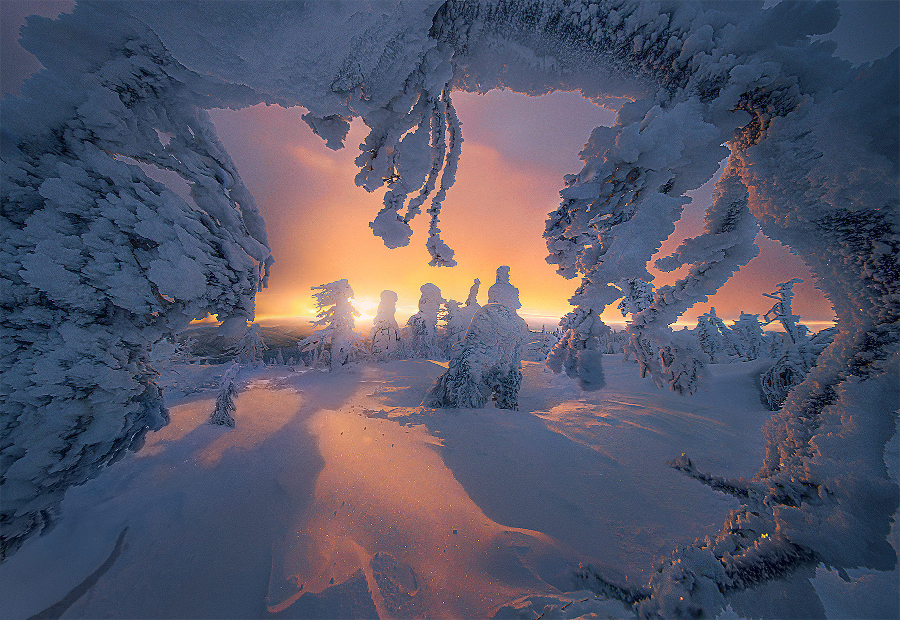 Frozen branches frame a flaming sunset through snowy forest at 1pm in the Alaskan winter.