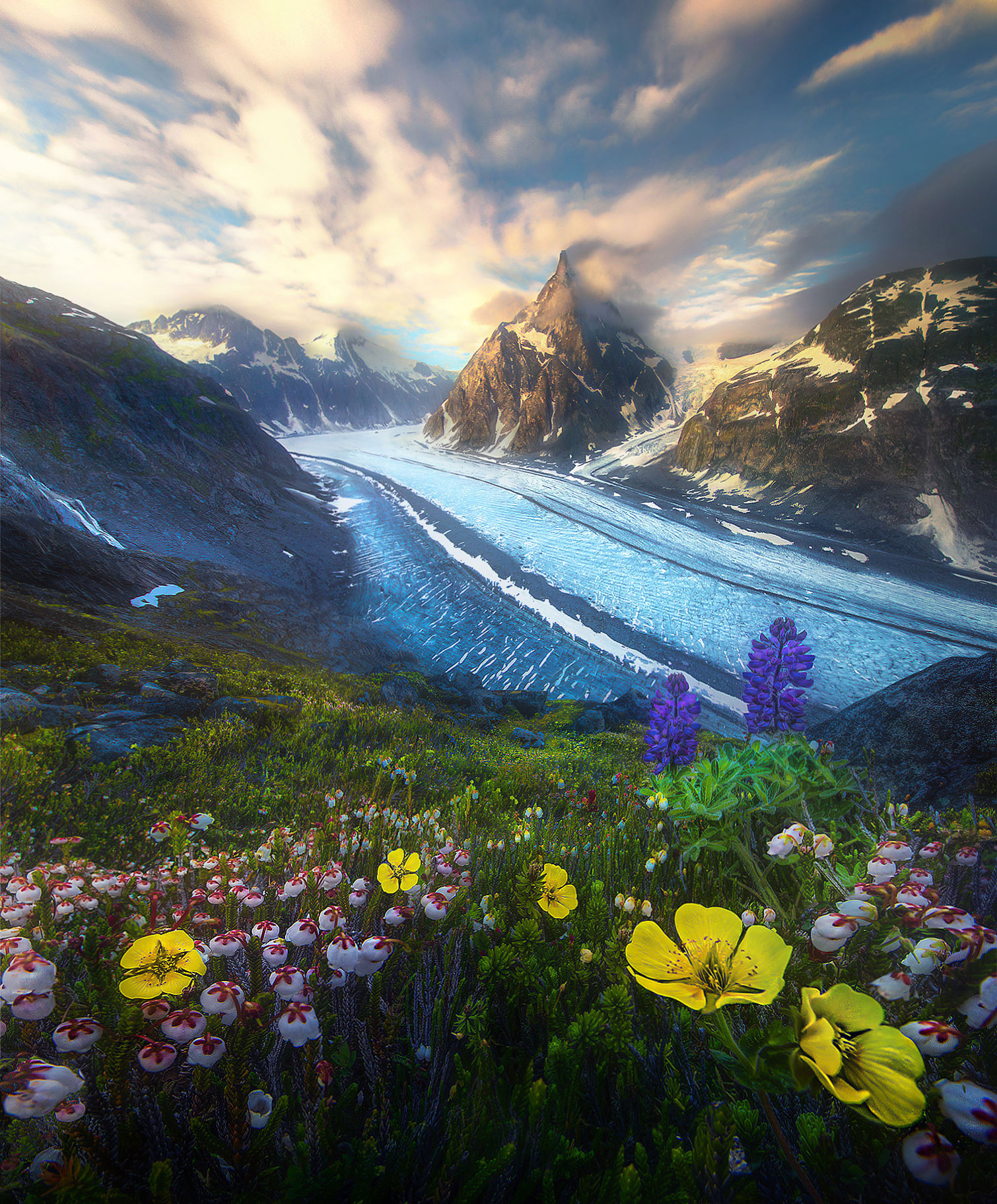 wildflowers, Alaska, glacier, boundary range, summer, photo