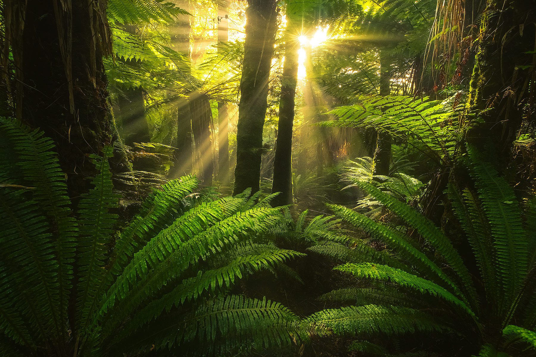 New Zealand, coast, forest, beams, light, rays, warm, photo