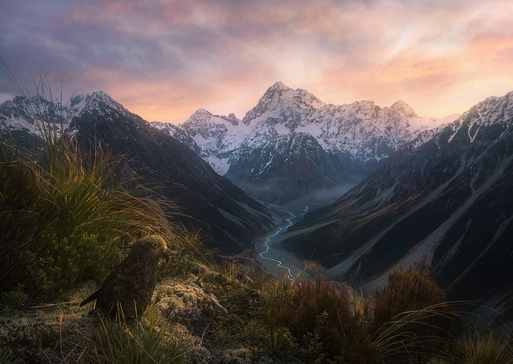 kea, parrot, New Zealand, mountains, landscape, d'archaic, photo