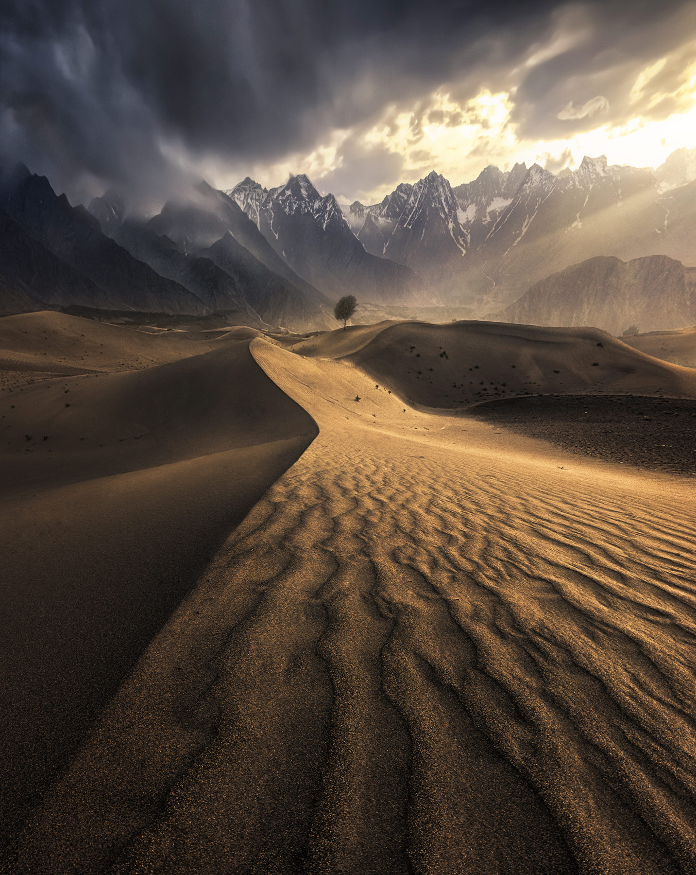Desert sands reach across this Himalayan valley towards a lone tree bathed in sunset light at the foot of high peaks.