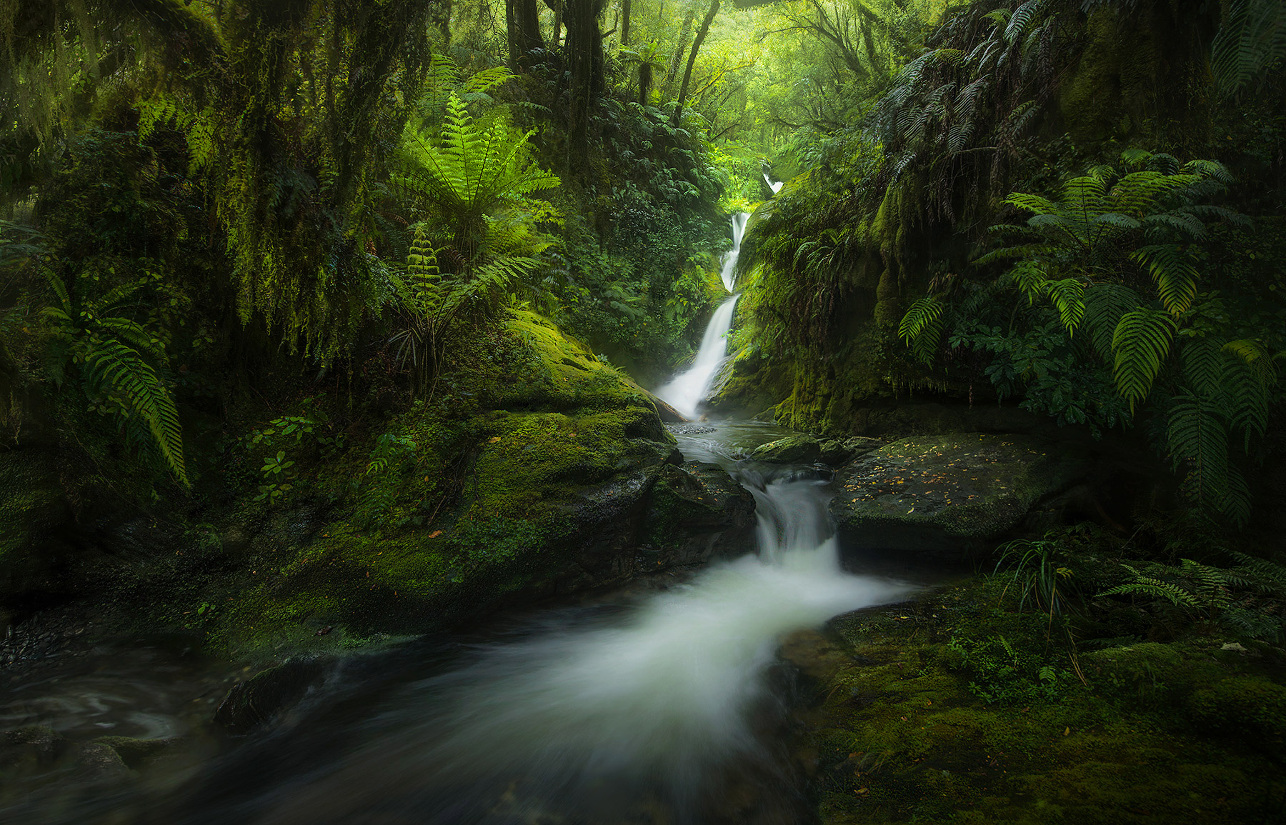 ferns, waterfall, New Zealand, fiordlands, photo