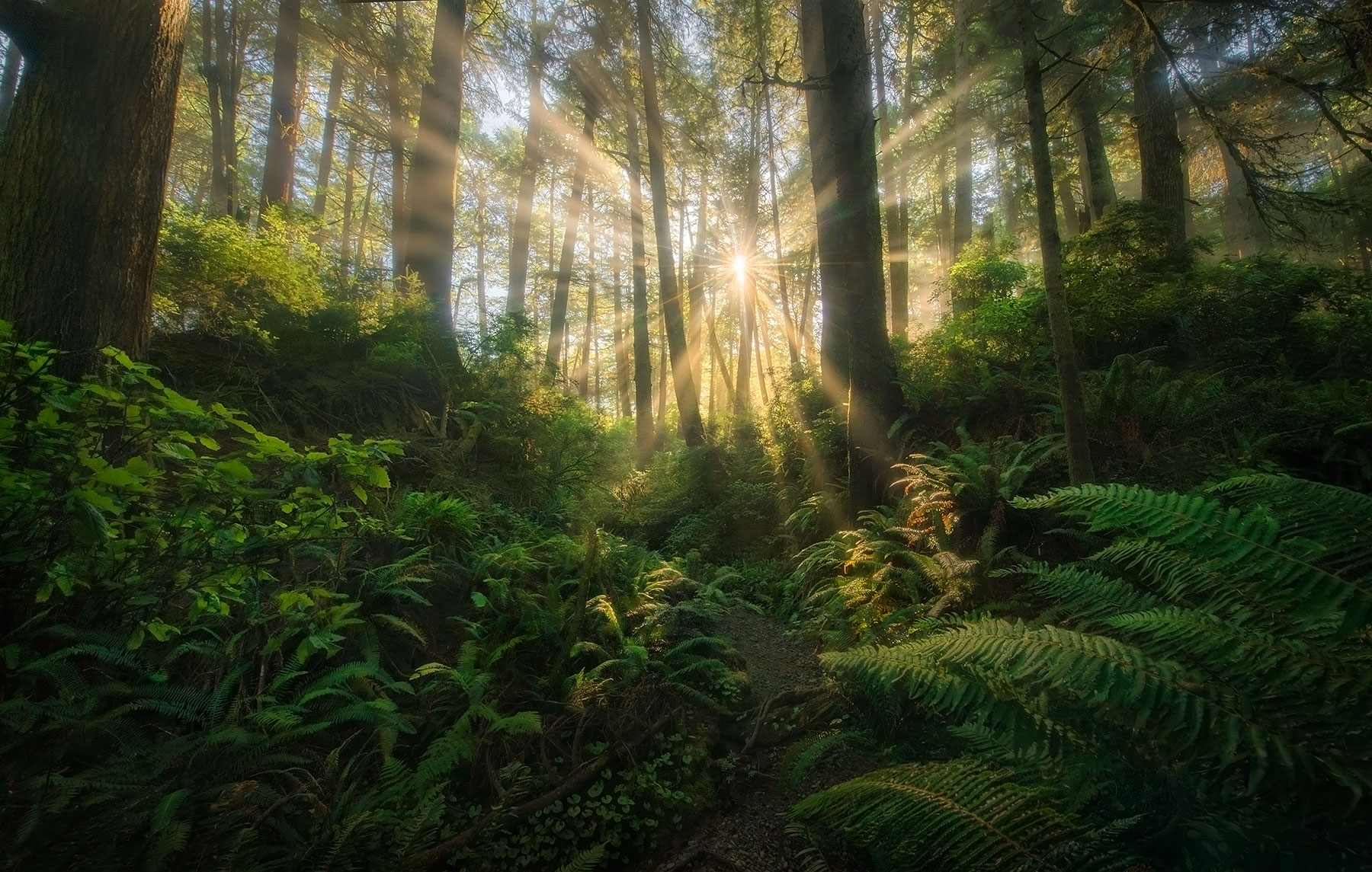 Green, Spring, Olympic, Washington, Rain Forest, photo