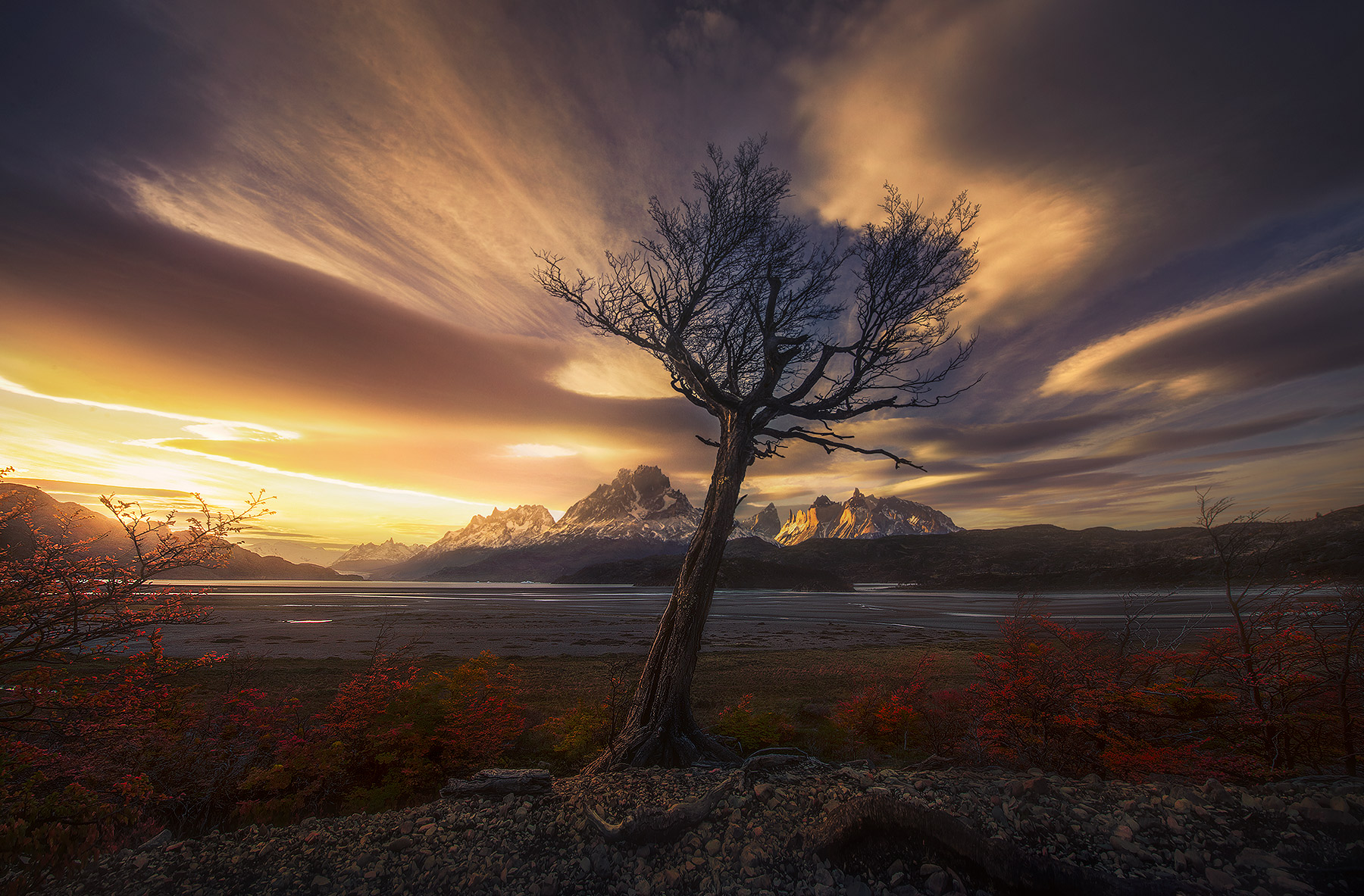 torres del Paine, horns, dead tree, gnarled, lone tree, lenticular, autumn, Chile, Lago grey , photo