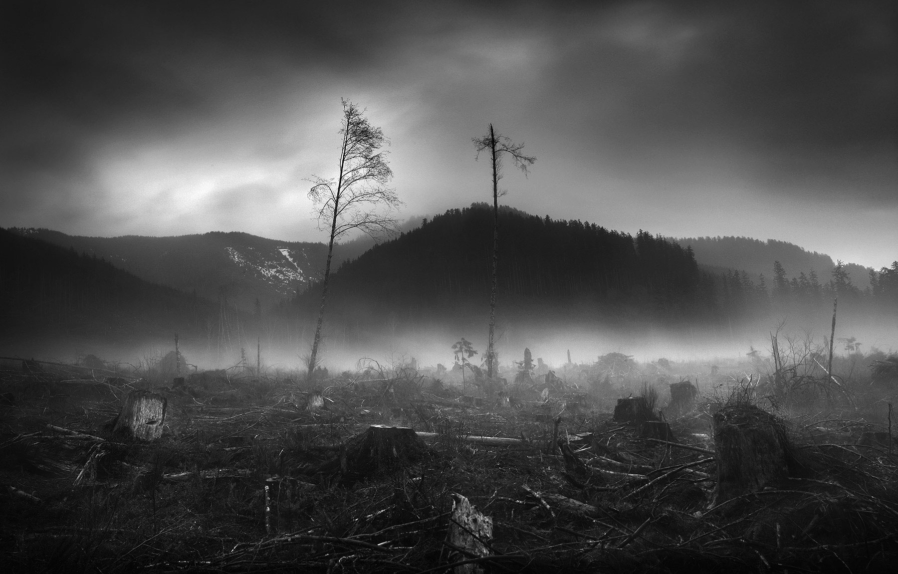 forests, clearcut, northwest, photo