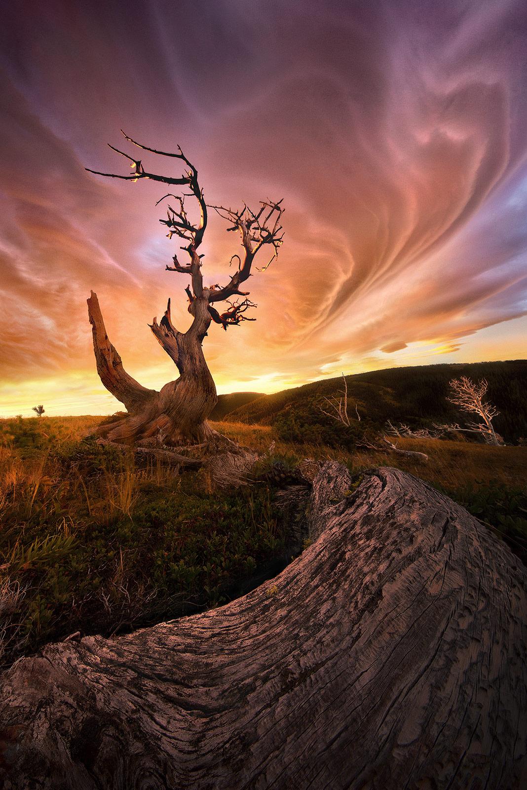 lenticular, blackfoot, montana, old, tree, photo