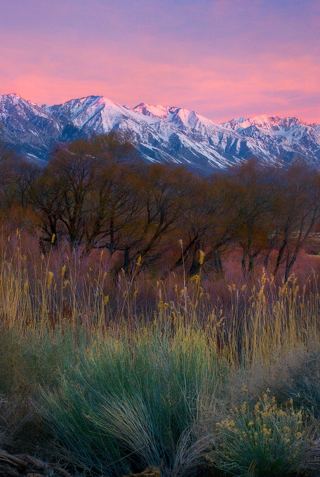 Colorful fields of tall grasses, Sage, Willow and Cottonwoods at the foot of the Eastern Sierra Range greet the sunrise.