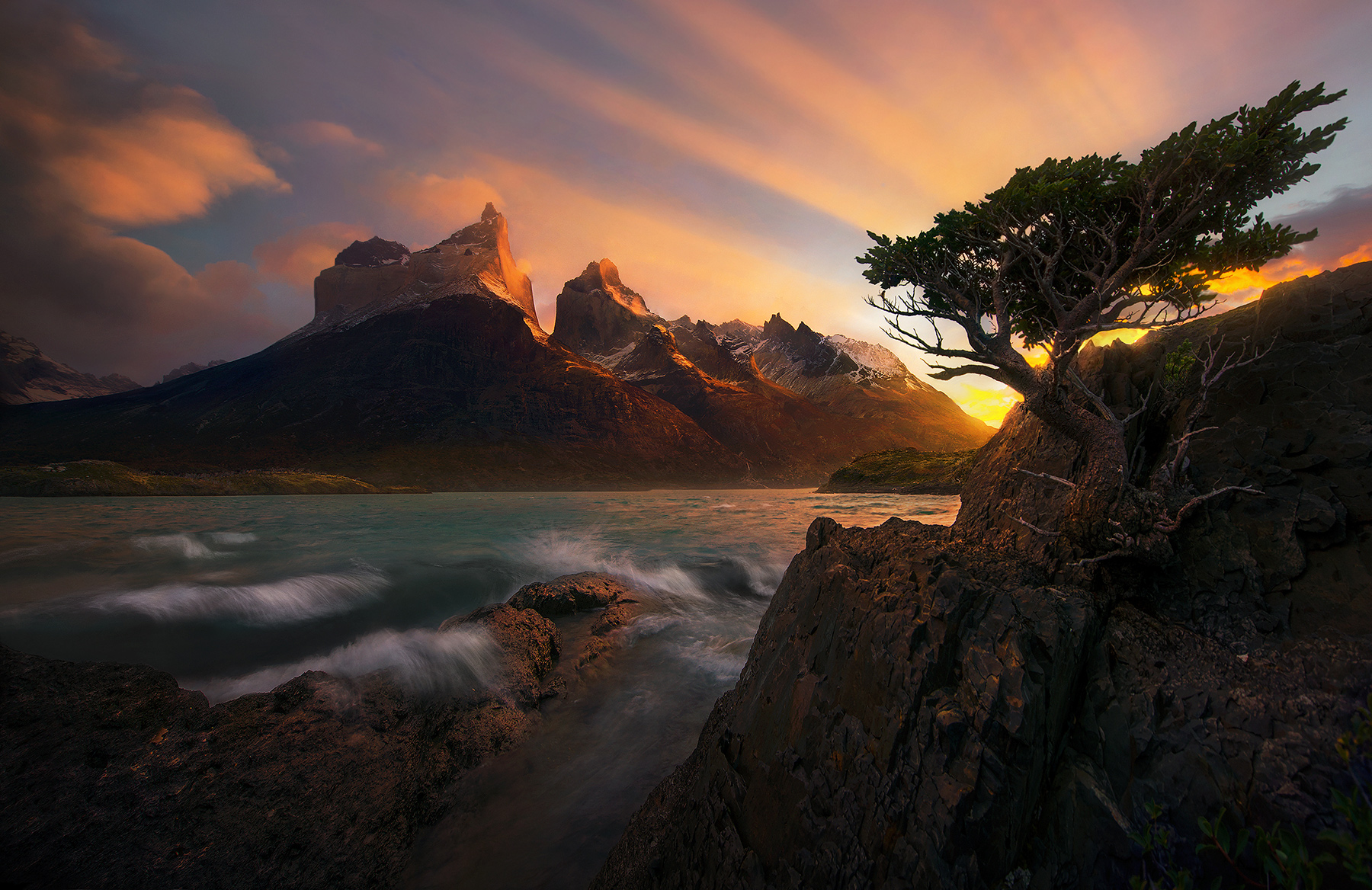 An old friend, this Coigue tree, perched on it's little ledge above one of the windiest lakes on Earth. Just surviving...