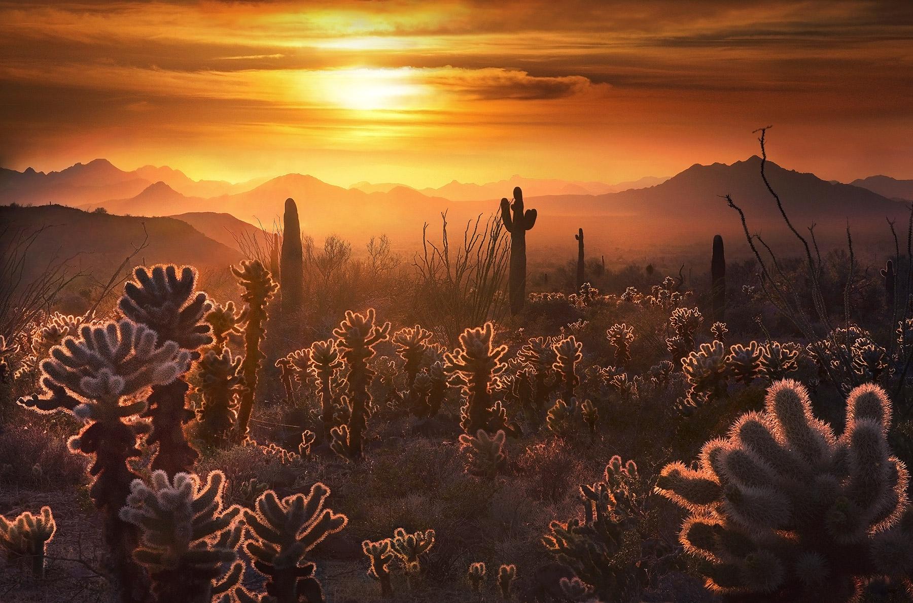 Cholla, Cactus, arizona, desert, sunset, photo