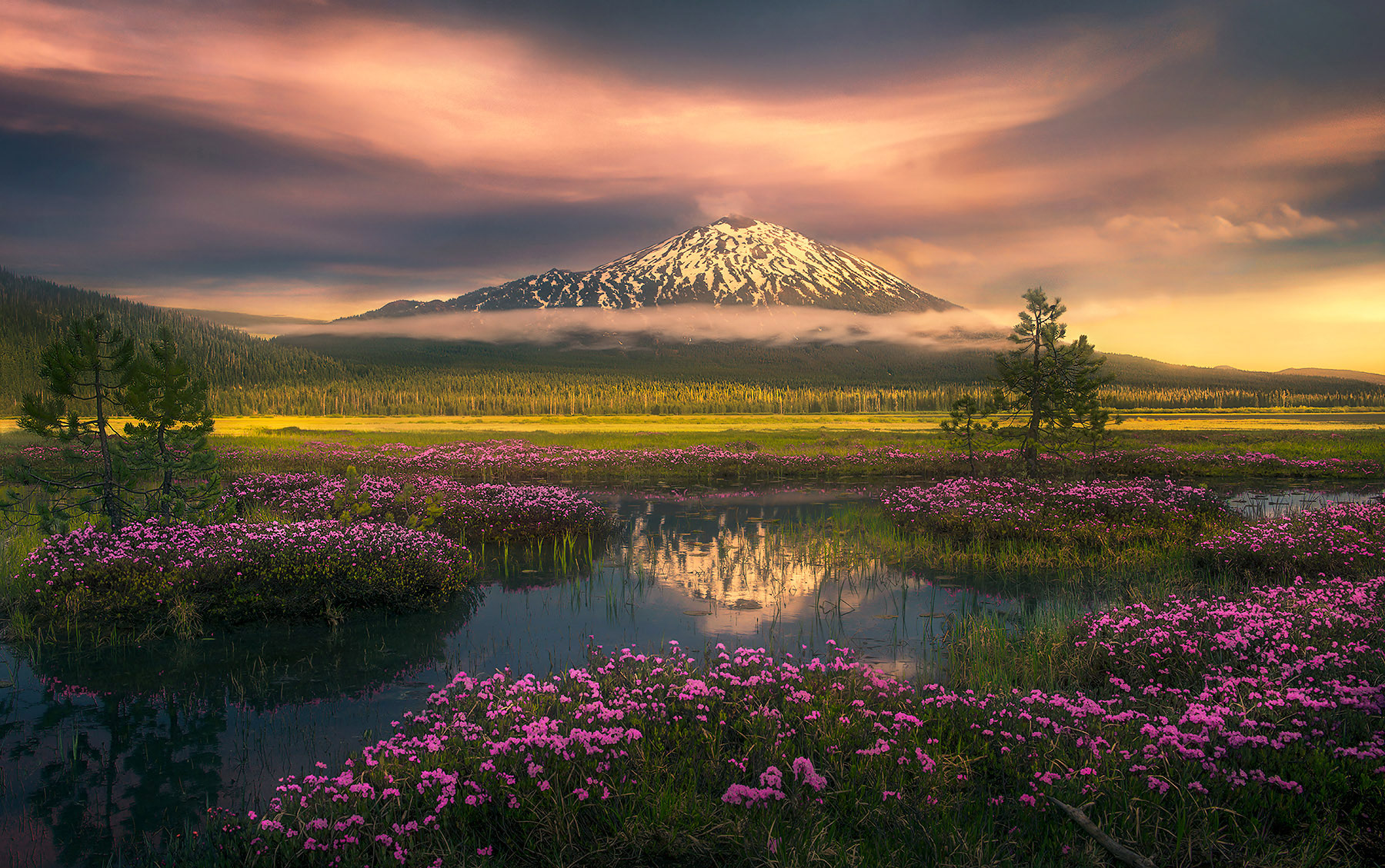 Three Sisters, Bachelor, Wildflowers, spring, reflection, sunset, sparks, photo