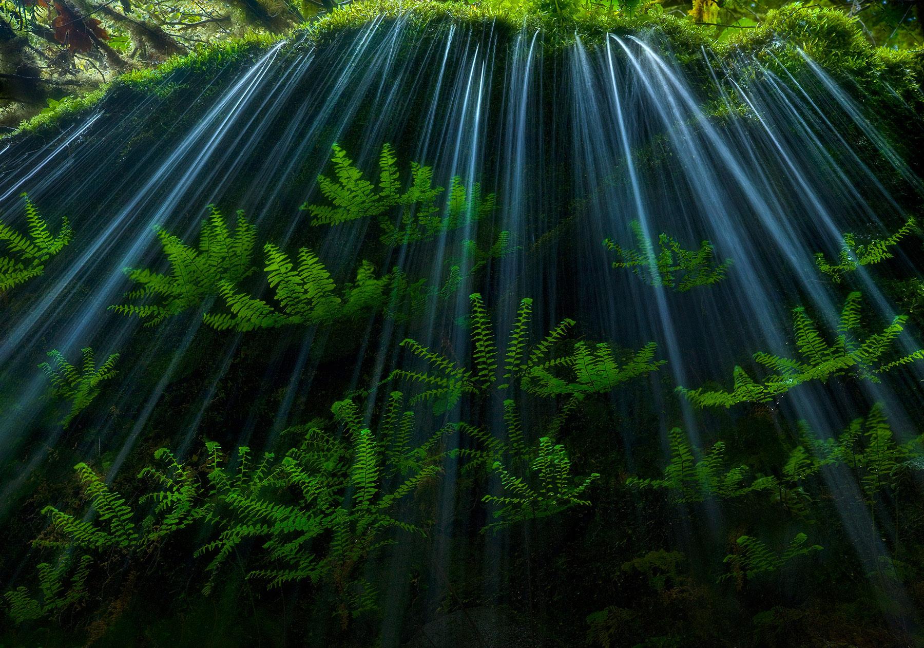 maiden fern, fern, spring, luminous, moss, cascade, oregon, columbia gorge, photo