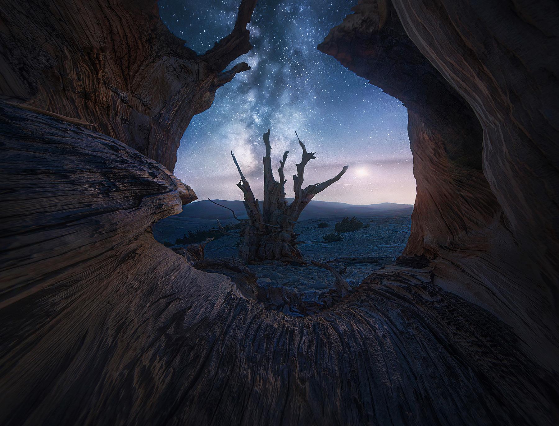 Bristlecone, night, sky, California, Milky Way, moon, photo