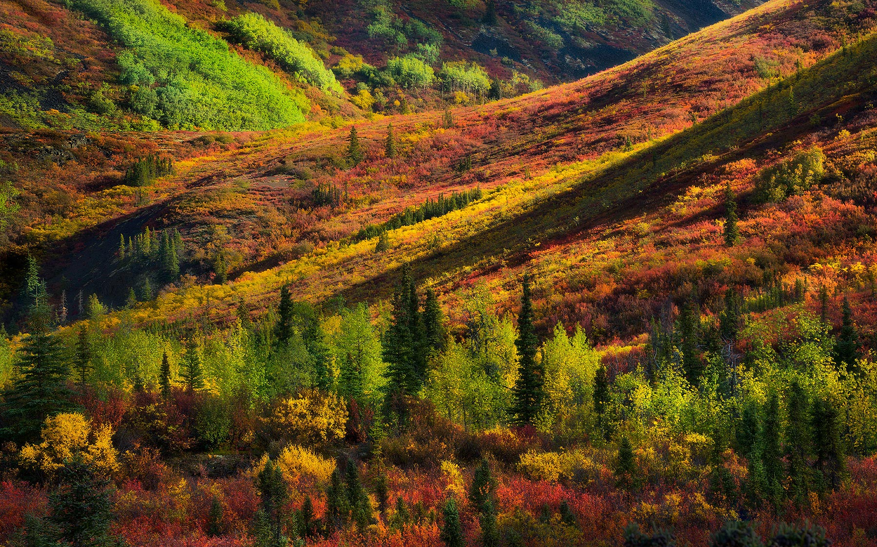 yukon, canada, autumn, dempster, photo