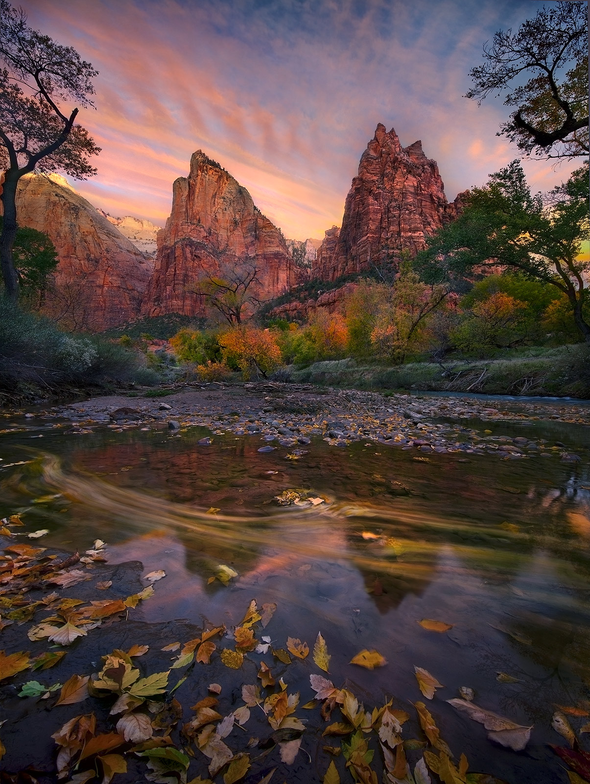 leaves, zion, autumn, utah, water, colors, sunrise, photo