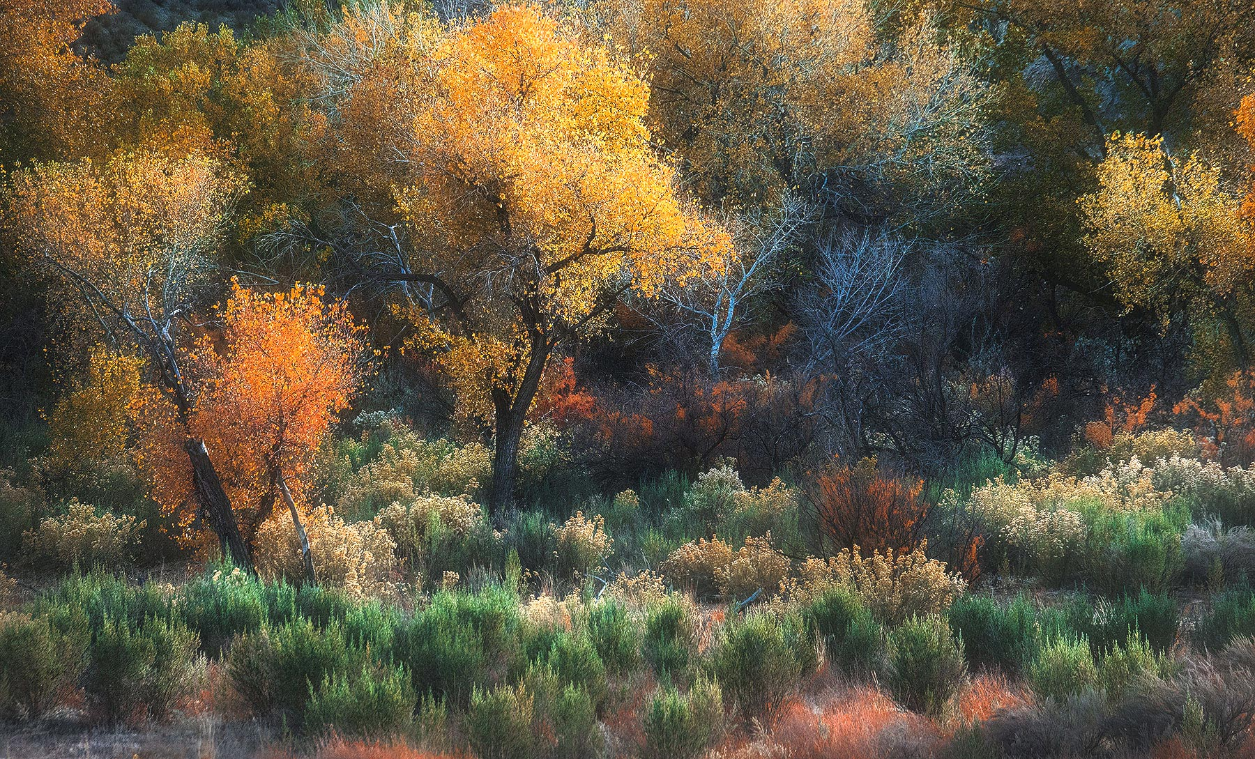 Utah, cottonwood, sagebrush, foliage, autumn, photo