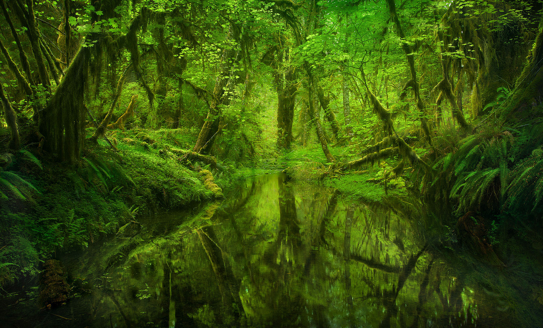 Rain Forest, Olympic, Washington, Trees, Old Growth, Woods, Reflection, Green, Spring, Washington, photo