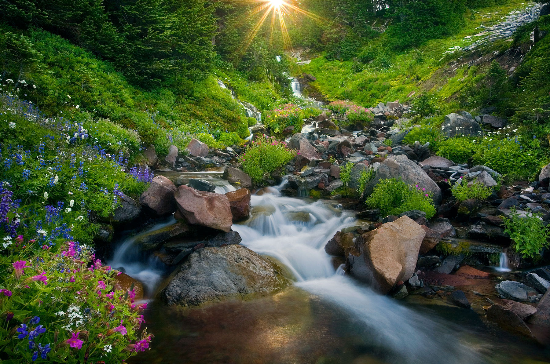 Rainier, Wildflower, Washington, Stream, Sun, photo